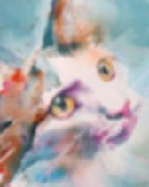 IMG_Cat.jpg