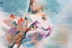 IMG_Cat