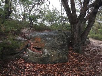 Aboriginal Blue Mountains Walk About