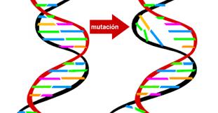 MUTACIÓN GENETICA
