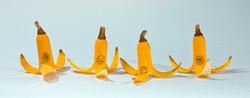 Toledo Bananas 2015 Bunch-Sex