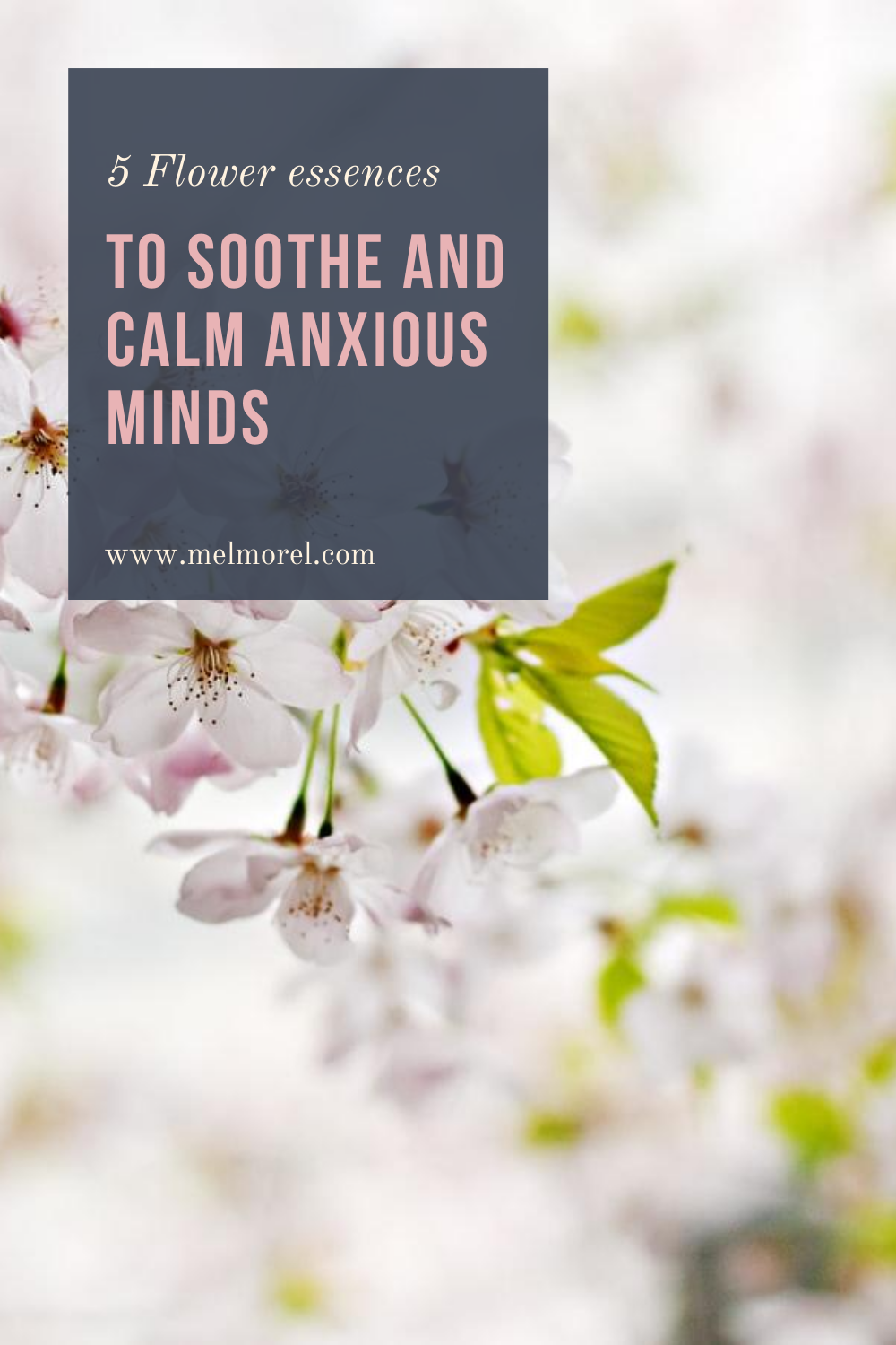 5 flower essences to soothe and calm anxious mind