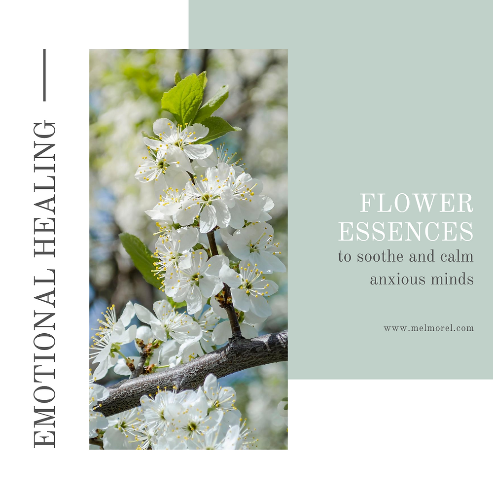 cherry plum-flower essences-emotional healing-flower essences to soothe and calm anxious minds
