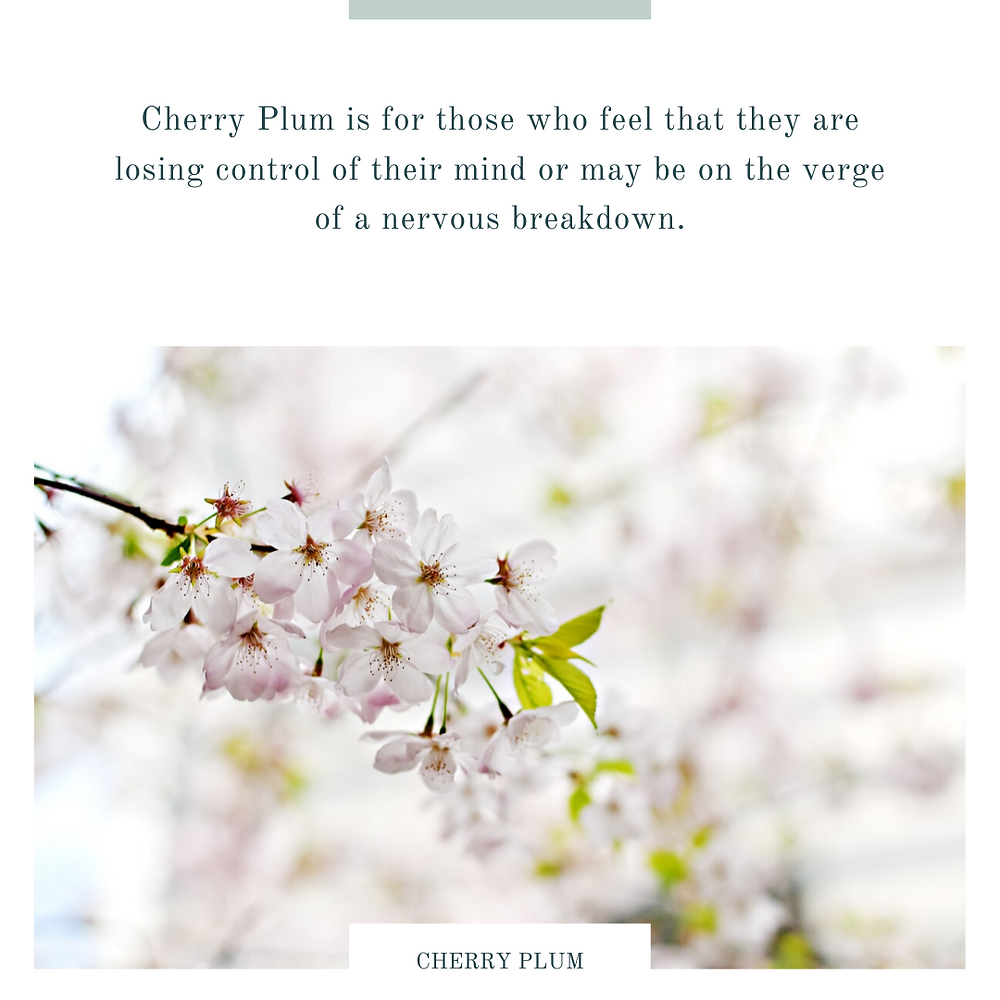 cherry plum-bach flower remedies-nervous breakdown-losing control of the mind-cherry plum flower-cherry plum tree-