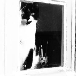 Ludwig à la fenêtre.