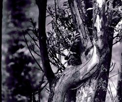 Histoire d'arbre.