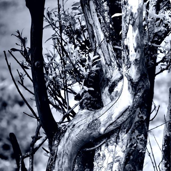 Hedo, Histoire d'arbre, Haute-Maurienne, s.d.