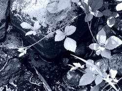 Pierre et feuilles.