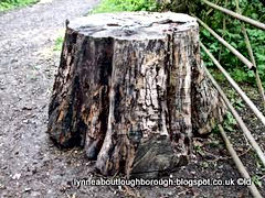 tree stump.JPG