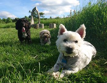 dogs at garenden estate park.jpg