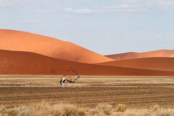 africa_namibia_living_desert_gallery_ory