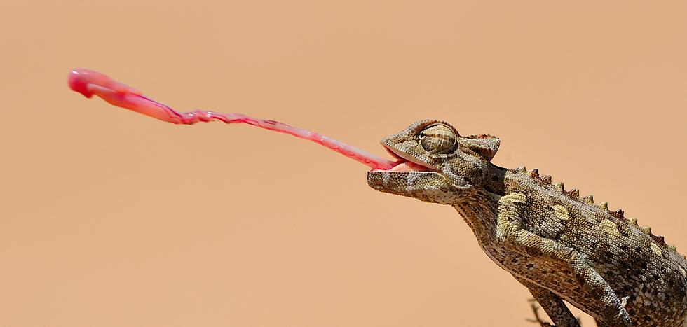 Chameleon%252525252011_edited_edited_edi