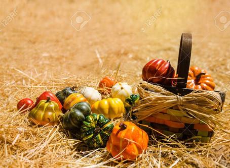 Conseils pour un bel automne