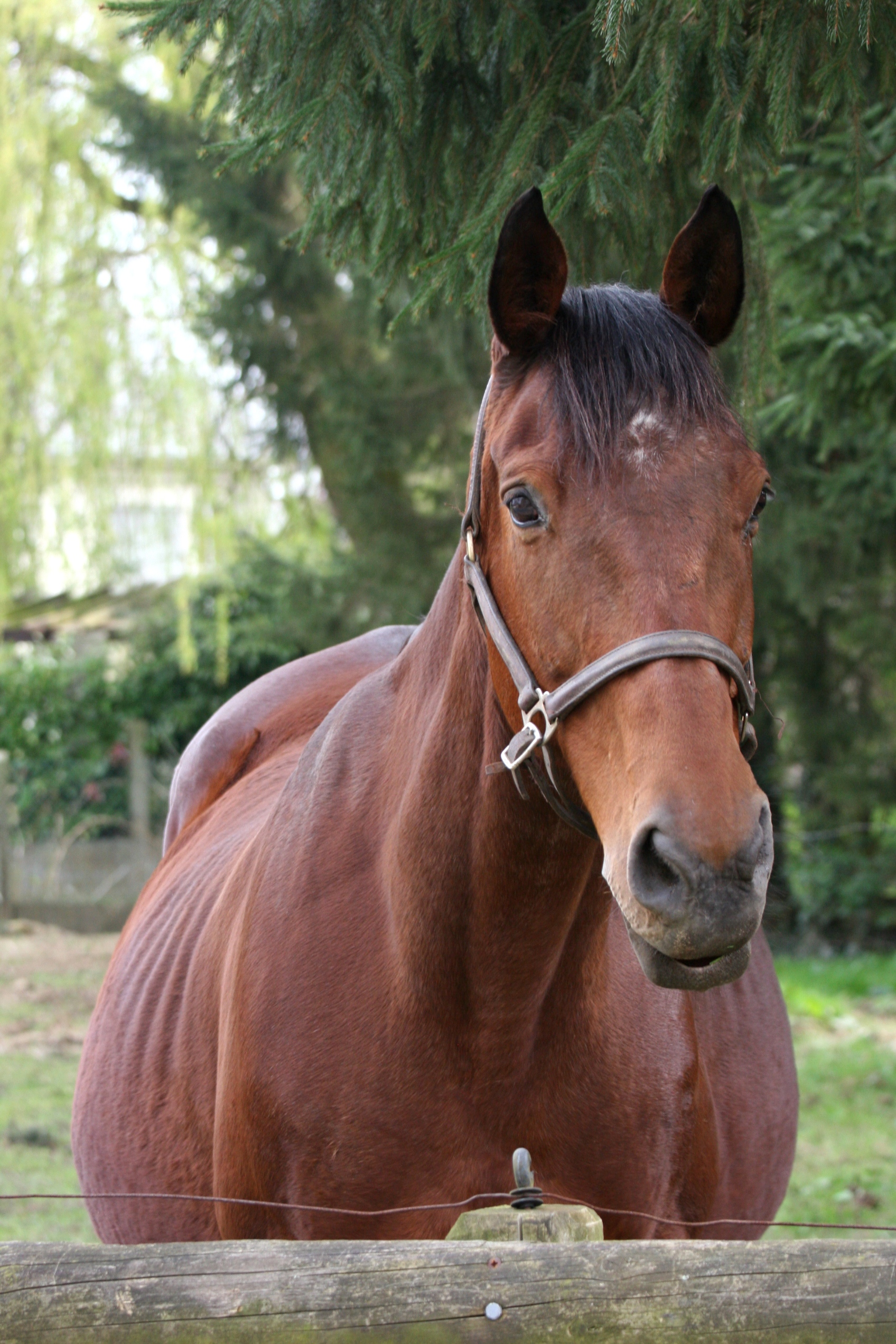 Hesterelle