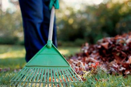 Limpieza Jardín