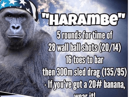Thursday 28.05.20 [RIP Harambe]