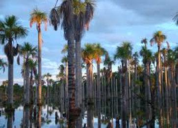 Trilha Lagoa das Araras - Nobres