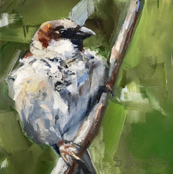 Hand painted portrait of a Sparrow