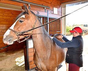 saddle fitting.JPG