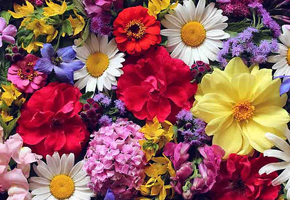 flower pic 10.jpg