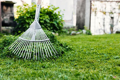 spring and fall lawn clean up