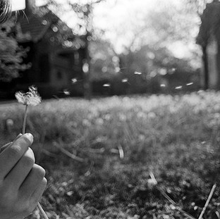 Paul blowing on dandelion weeds.