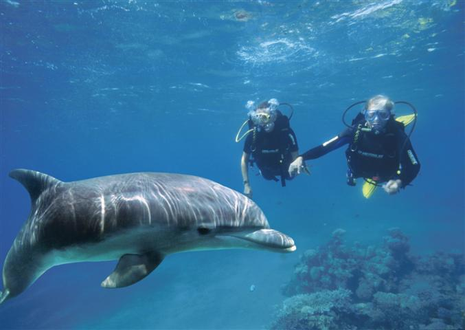 Dolphin Reef - Eilat INTRO DIVE (Small).jpg