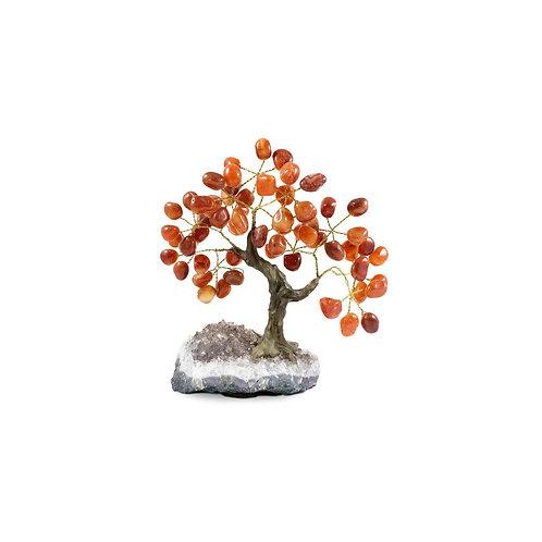 Small (13cm) | Bonsai Trees