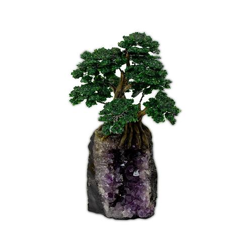 Medium (12cm)   Bonsai Trees