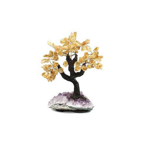Large (28cm) | Bonsai Trees