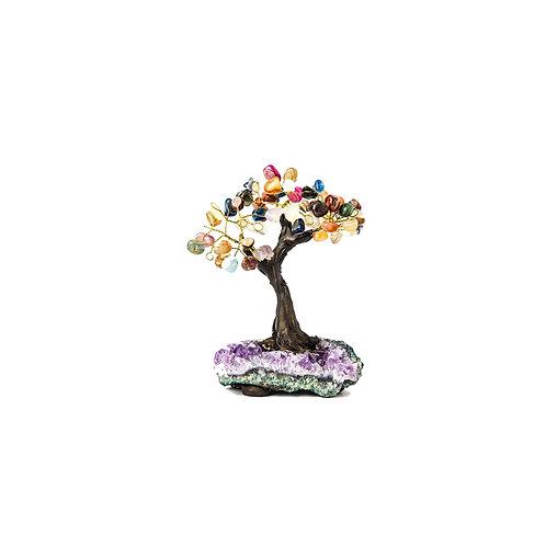 X-Small (9cm) | Bonsai Trees
