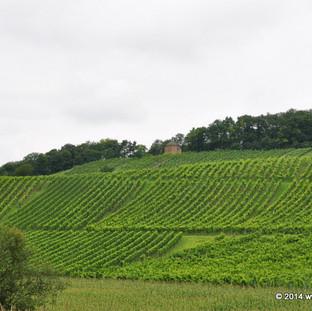 Weinberge & Wanderwege