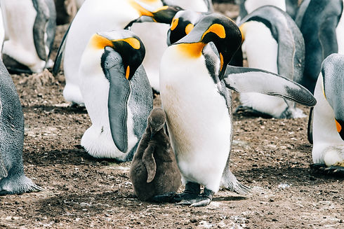Penguin Pic  (1).jpg