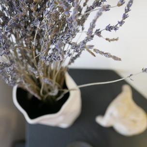 צמחים בבית -  כל האופציות