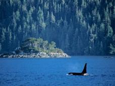 温哥华岛旅游之文化与历史行