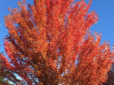 温哥华岛生活之  秋季雅景休闲好去处,不负好时光!