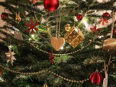 圣诞倒计时!温哥华岛圣诞树农场大盘点