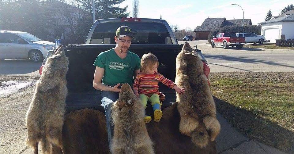 加拿大猎人在出售捕获的郊狼皮毛。