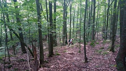 Forêt_de_Cleveland.jpg