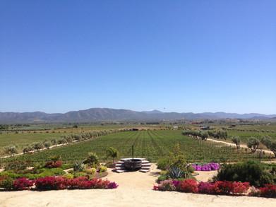 Vista de Finca La Carrodilla