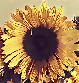 Image-1_edited.jpg