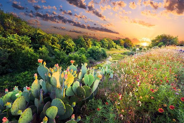 Flowering cactus and Indian blanket wild