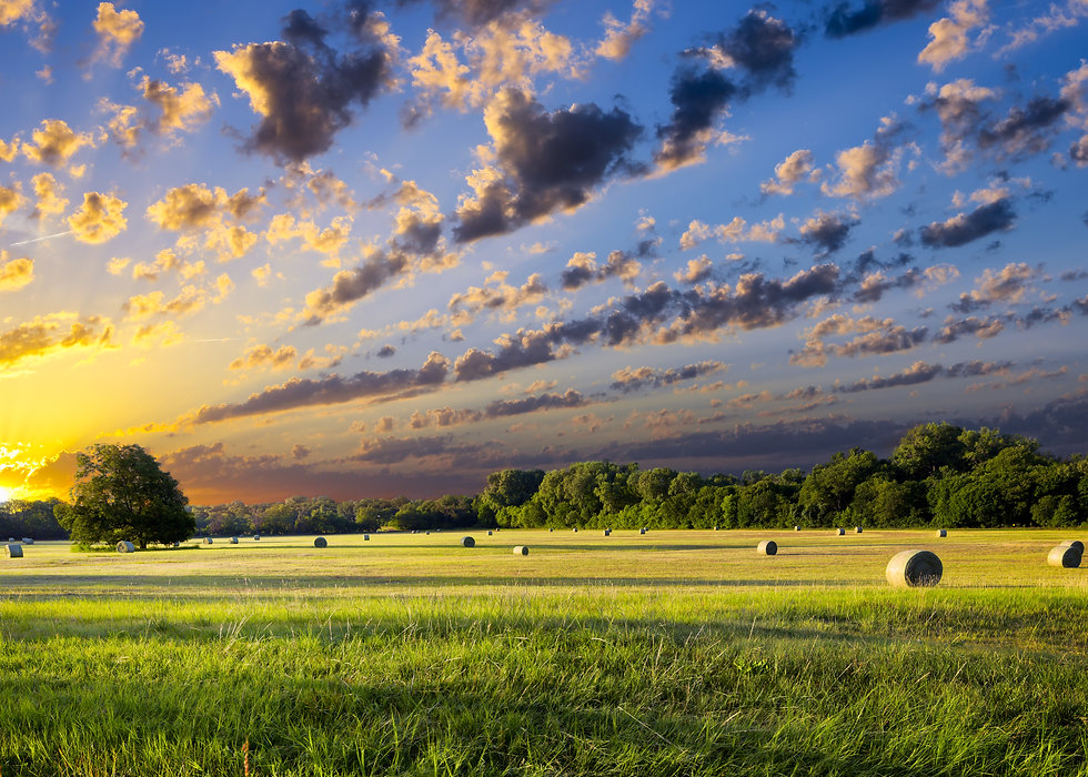 Tranquil Texas meadow at sunrise with ha