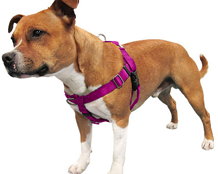 Dog Harnesses: The good, the bad and the ugly