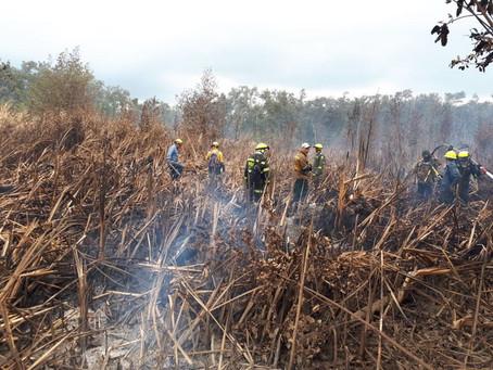 El incendio del Vía Parque Isla Salamanca está controlado: Parques Nacionales