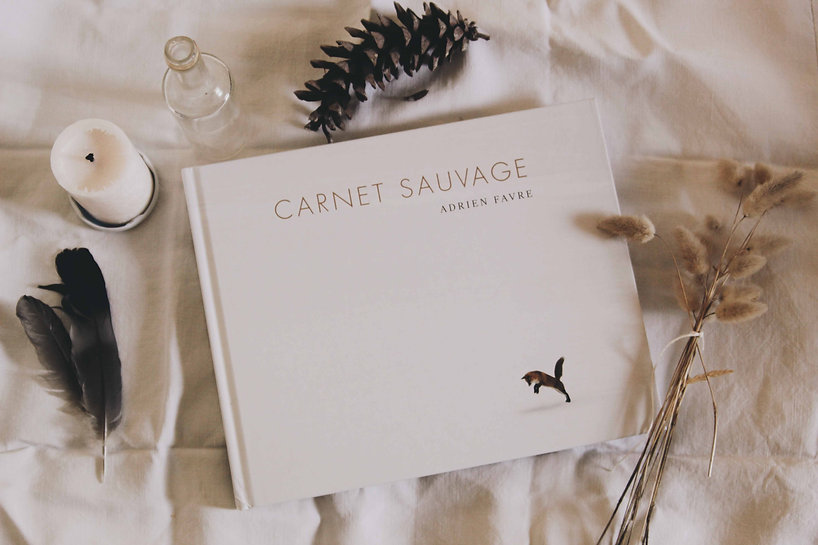 carnet sauvage 2.jpg