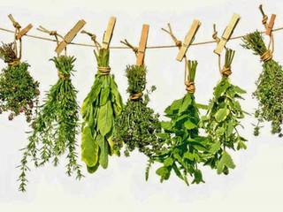 50 plantas que atraen energías positivas según la sabiduria ancestral