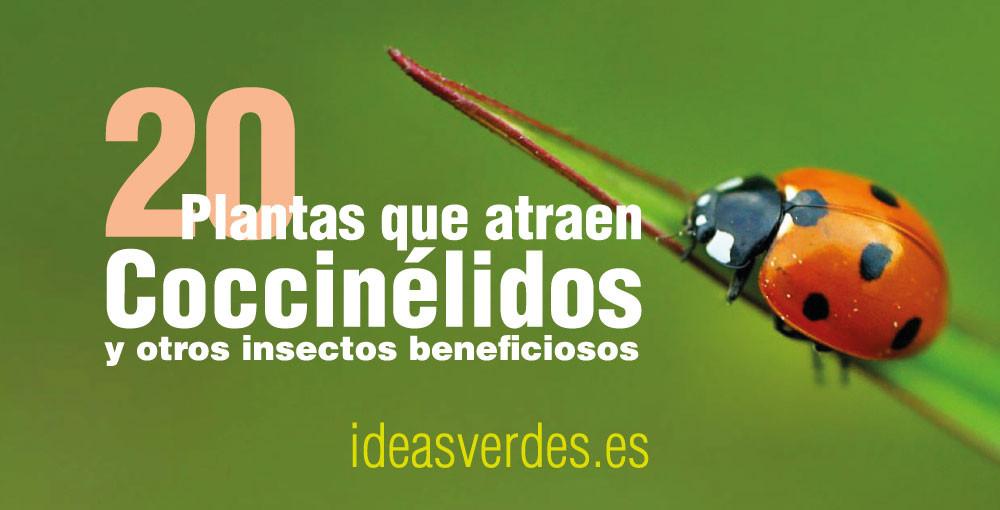 atraer insectos