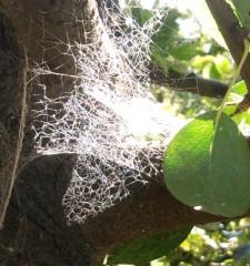 Las Arañas y su gran ayuda en el huerto