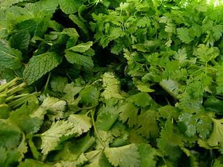 10 plantas con propiedades insecticidas